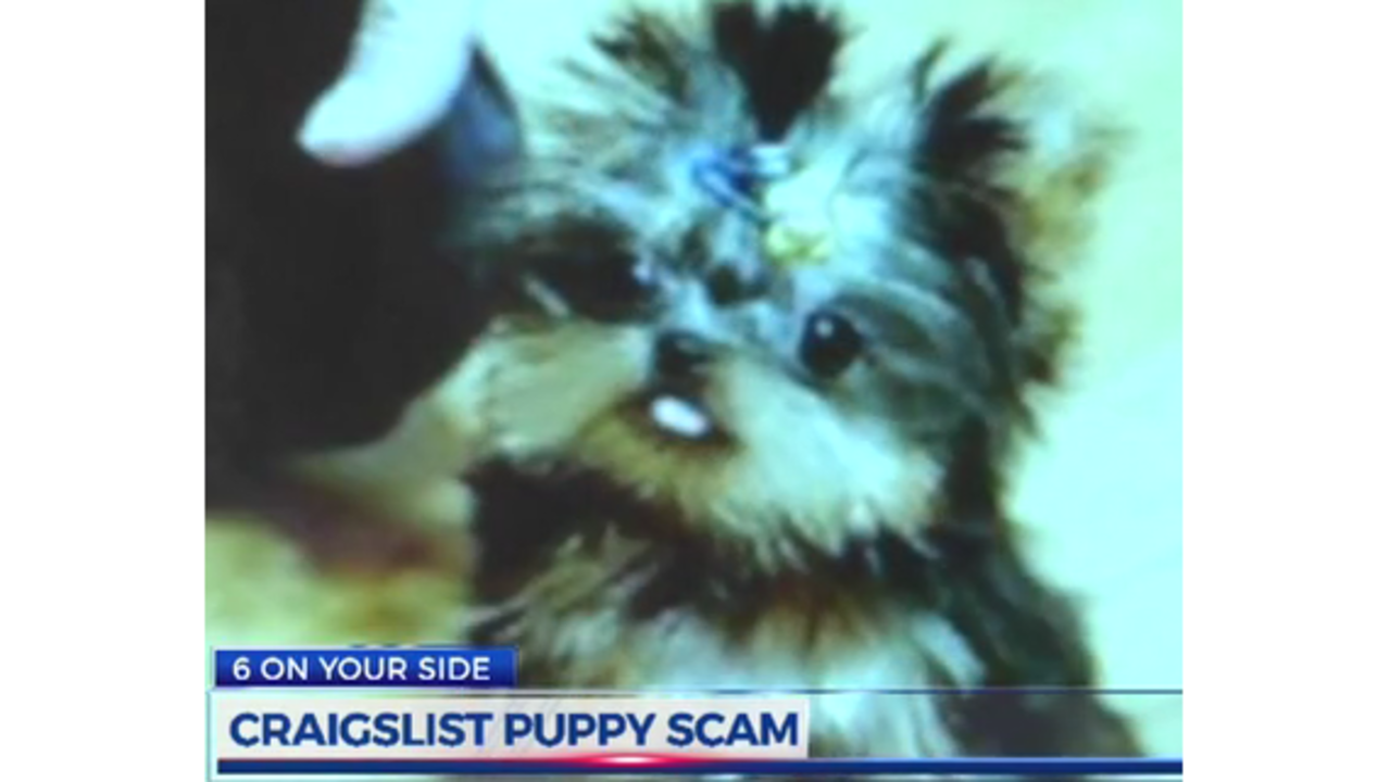 East Tennessee Couple Taken In By Craigslist Puppy Scam