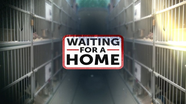 Waiting for a Home: Find your local animal shelter